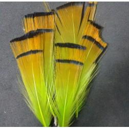zlatý bažant - Chartreuse