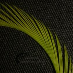 Gosse - srpky - Cad.Green